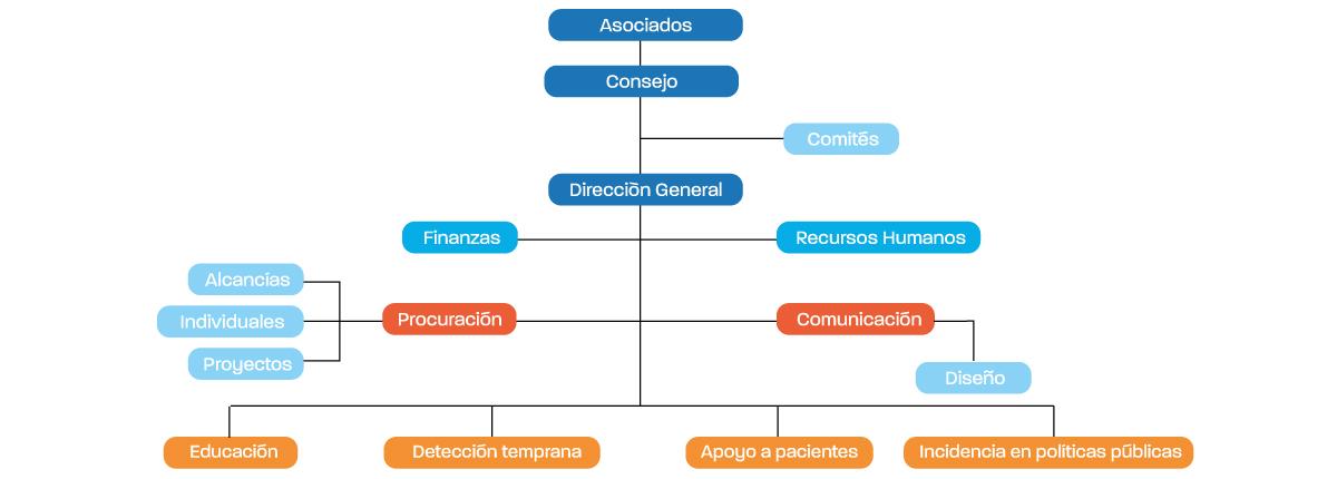 Organigrama AMLCC